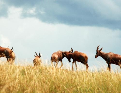 Akagera Safari Park Rwanda