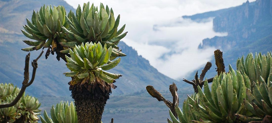 Climbing Mount Elgon
