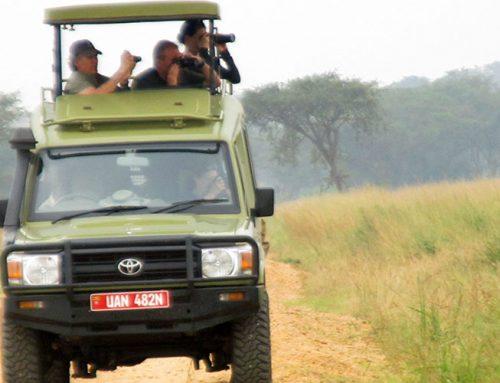 8 Days Gorilla and Big Game Safari