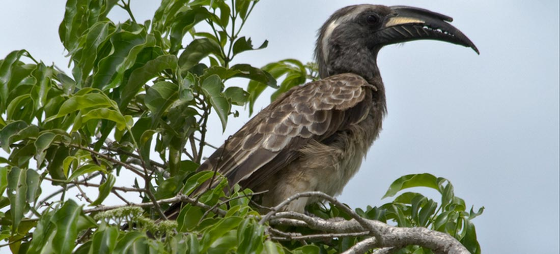 Birding in lake Mburo
